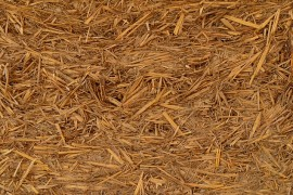 The A to Z of Biomass
